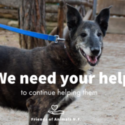 Sign the petition to delay our eviction from the shelter!